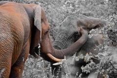 Curio-Samir-Randera-Rees-Elephants