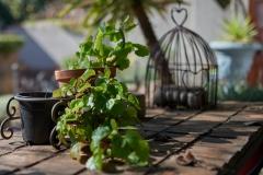 Garden-Decor2